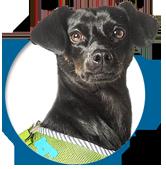 dog-smilla-team_smilla