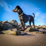 20170517-2017-05-17 07.34.34_dog-smilla-galerie